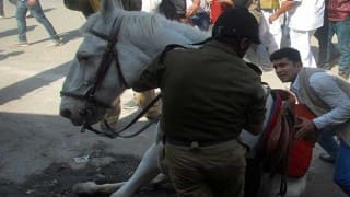 Injured police horse Shaktimaan recovering: Doctor