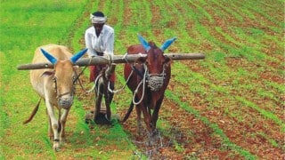 Yavatmal: Farmer and his son commit suicide by hanging themselves from same tree