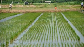 Telengana to take help of Chinese firms for irrigation projects