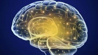 Brain Health Tips: डाइट में शामिल करें ये 'ब्रेन-फूड', नहीं तो बाद में पड़ेगा पछताना