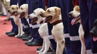 Meet Delhi Police's newest recruits: 30 tough but adorable Labrador Retriever dogs gearing up to fight crime! (Watch Video)