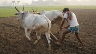 Release funds for MNREGA, pay damages to farmers: Supreme Court to Centre