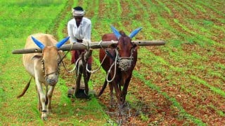 Bundelkhand farmers to get drought relief