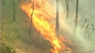 Forest fires ravage 3,000 hectares in Himachal Pradesh