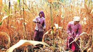 Osmanabad: Help proposals in 76 farmer suicide cases rejected