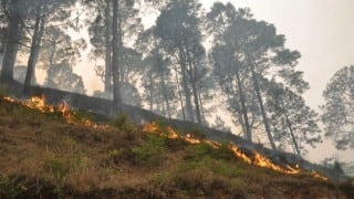 Uttarakhand Forest Fire: A calculated ploy by timber mafia or builder lobby?