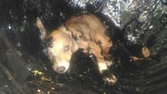 Puppy miraculously survives after being trapped in a drum of tar for over 24 hours