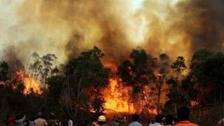 Uttarakhand forest fire: Affected areas down by over 70 per cent, says NDRF