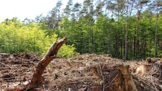 Center Sends Critical Wildlife Habitat Guidelines To States For The Protection Of Forest Dwellers' Rights