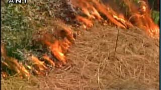 Low moisture and heat led to Himachal forest fires