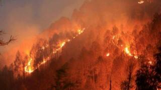 Uttarakhand Forest Fires can have devastating effect on state's glaciers and rivers of North India, says experts