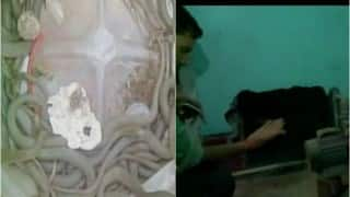OMG! Over 150 snakes found in retired forest officer's house in Uttar Pradesh (Watch video)