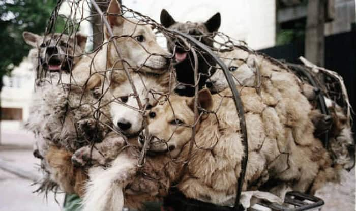 Image result for Yulin dog eating festival