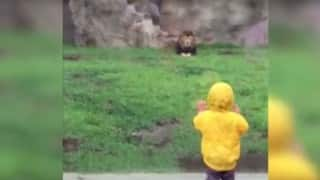 Lion tries to pounce on little boy! Watch it till the very end to know what happens next
