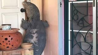 Scary! A giant lizard tried to enter this Thai man's house. Watch what he did (Viral Video)