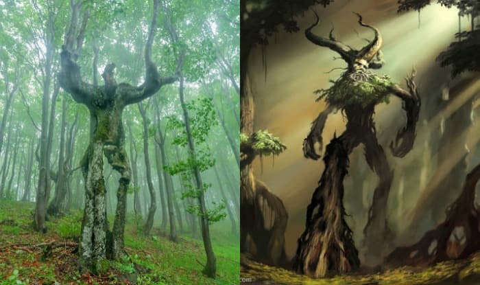 Trees Of The World Lord Of The Rings