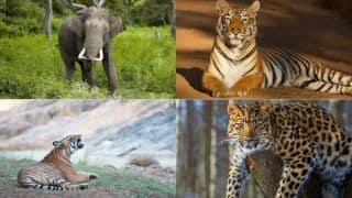 World Wildlife Day 2021: Significance And Theme of This Day