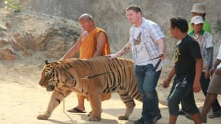 Thailand's popular Tiger Temple to shut down soon