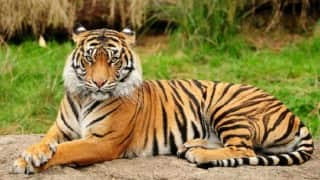 World Environment Day 2016: UN aims to end wildlife trafficking in India, other parts of South Asia