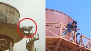 Bull climbs 60ft water tank, balances on edge aka Veeru in Sholay