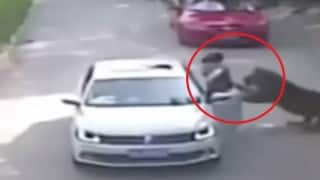 Caught on Camera: Woman mauled by tiger in front of family in Badaling Wildlife World! (Watch Viral Video)