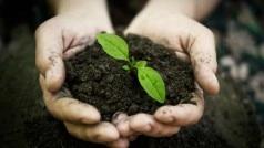 6,70,803 saplings to be planted in Uttar Pradesh