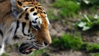 International Tiger Day: 7 places where you can spot the big cat in India