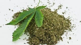 2 held with ganja worth Rs 4 lakh