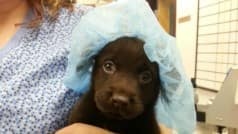 Owner of this pup decided to euthanize him. What a nurse did next will move you to tears