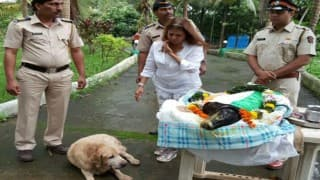 Tiger, 26/11 police dog who stood eight days outside Taj hotel dies of lung infection