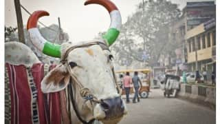 Cattle slaughter: Meghalaya Assembly passes resolution against centre notification banning sale; demands withdrawal