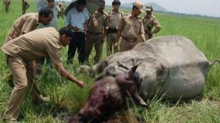 काजीरंगा उद्यान में मादा गैंडे, उसके बच्चे का शिकार, सींग गायब