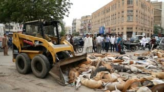 700 stray dogs poisoned to death by Pakistani civic officials. This is cruel!