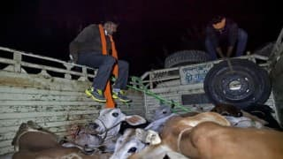 BJP worker killed by VHP, Bajrang Dal cow vigilantes