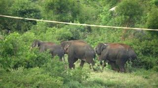 हरिद्वार-ऋषिकेश के बीच 'किलर ट्रैक' पर अब नहीं होगी हाथियों की मौत, मिट्टी के रैम्प पर चलेंगे वन्यजीव