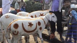 Plea in Supreme Court against sacrificing animals on Bakr-Eid