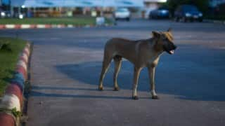 Class 3 student attacked, killed by stray dogs in Jharkhand