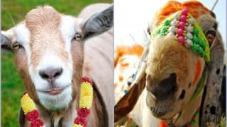 Eid al-Adha 2019: History, Date, Significance And Celebrations of Muslim's festival of Eid-Ul-Zuha or Bakra Eid