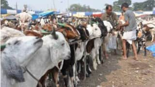 Bakr Eid: Mumbai Traffic Police Chief Tells Staff Not to Check Vehicles Carrying Cattle