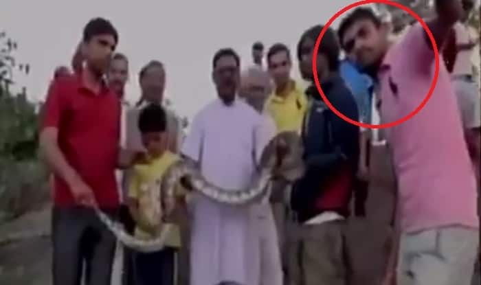 Rajasthan: Man attempts to take selfie with python in Mt. Abu; watch what happens next! (Video)