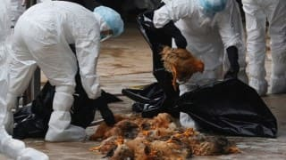 Bird flu in Delhi: Carcasses of four crows found at Shakti Sthal