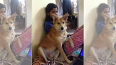 Indian Woman Turns Down Arranged Marriage, Refused to Abandon Her Furry Friend