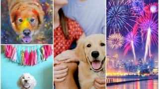 Ensure safe Diwali for your pets: 7 tips to take care of pets this Diwali 2016