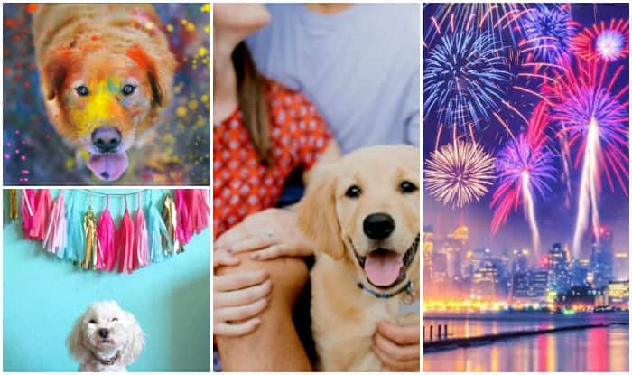 Ensure safe Diwali for your pets: 7 tips to take care of