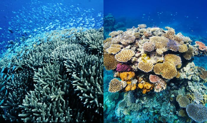 Australia S Great Barrier Reef 6 Other Natural Wonders To