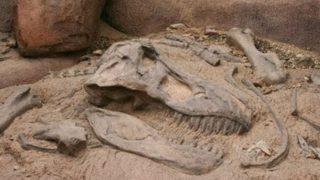 First fossilised dinosaur brain tissue identified