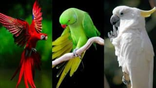 How to catch a cheating husband? Adopt a parrot! 7 times Parrots were our loudmouth friend