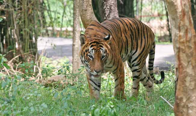 Protected areas important for large animals, says study