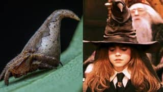 Eriovixia gryffindori: New spider named after wizard from Harry Potter series by Indian Researchers