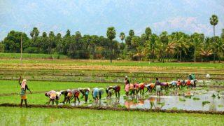 Bhartiya Kisan Union slams demonetisation, says farmers not getting cash